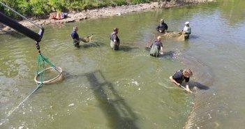 Μεταφορά ψαριών από την Λίμνη Βουλκαριά στη Λίμνη Παμβώτιδα των Ιωαννίνων