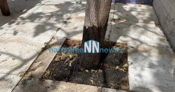 Ναύπακτος: Απίστευτο… Έριξαν λάδια σε δέντρο για να το ξεράνουν
