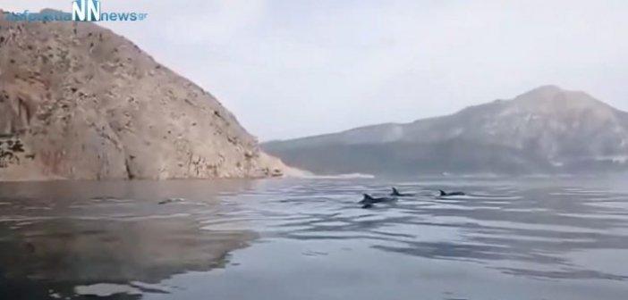 Κάτω Βασιλική: Όμορφες εικόνες με δελφίνια στην Λιμνοπούλα (VIDEO)