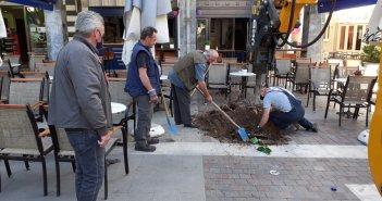 """Αγρίνιο: Νέα δένδρα στην πλατεία Δημοκρατίας – """"Ευθύνη όλων η προστασίας τους"""""""