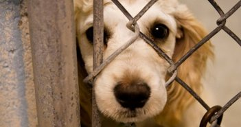 Ζώα συντροφιάς: Οι αρμοδιότητες περνούν από το Αγροτικής Ανάπτυξης στο Εσωτερικών