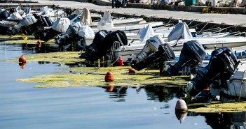 Το φαινόμενο της «πράσινης παλίρροιας» στο λιμάνι της Πρέβεζας