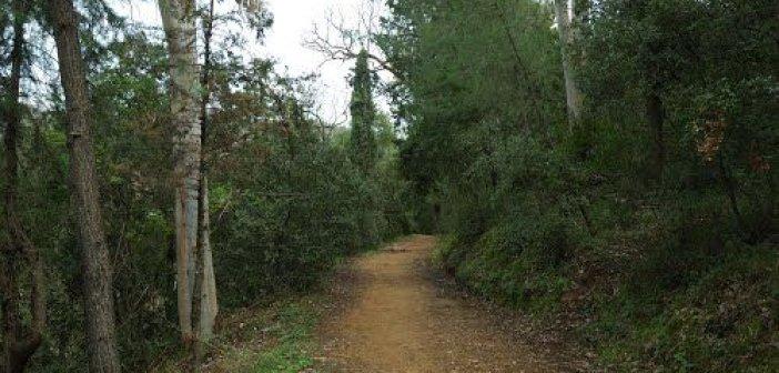 Δημήτρης Τραπεζιώτης: Προστασία και αναβάθμιση του περιαστικού δάσους του Αγίου Χριστοφόρου
