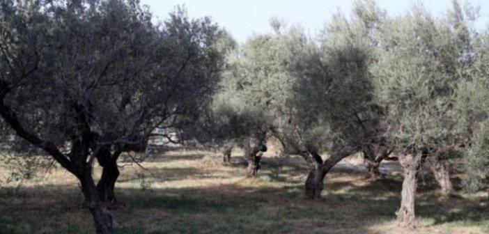 Τραγωδία στην Κρήτη: 18χρονος εντοπίστηκε από τη μητέρα του νεκρός σε χωράφι