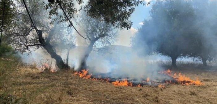 Μεσολόγγι: Επιχείρηση της Πυροσβεστικής για πυρκαγιά στην Αγριλιά