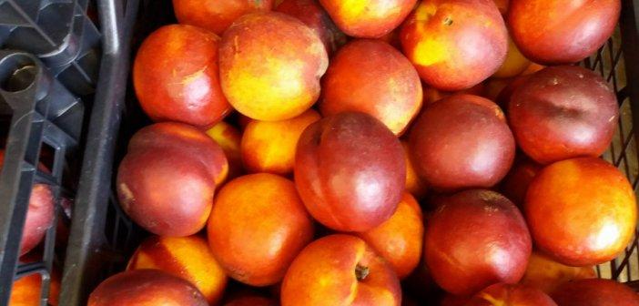 Κοινωνικό Παντοπωλείο: Μέχρι τις 10 σήμερα το πρωί η διανομή  φρούτων στο Κλειστό Γυμναστήριο Αγρινίου