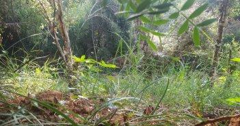 Ηλεία: Καλλιεργούσε χασίς και συνελήφθη – Κατασχέθηκαν 116 δενδρύλλια κάνναβης