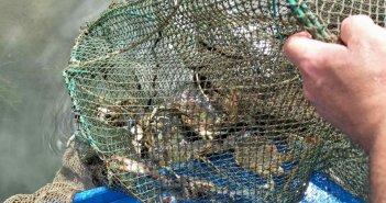 Παράνομα αλιευτικά εργαλεία εντοπίστηκαν στο Διόνι (φωτο)