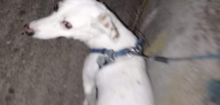 Αγρίνιο: Βρέθηκε μικρόσωμος σκύλος στον Άγιο Ιωάννη Ρηγανά