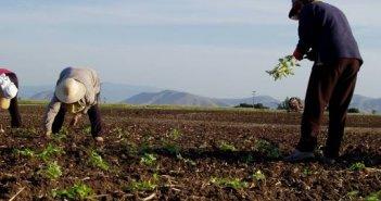 Διευρύνεται ο αριθμός όσων δικαιούνται εγγραφή στο Μητρώο Αγροτών