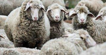 Περιφέρεια Δυτικής Ελλάδας: Οδηγίες προς κτηνοτρόφους για την προστασία από τον καταρροϊκό πυρετό