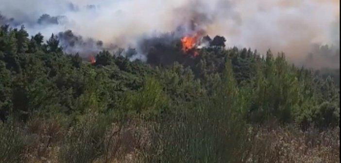 Φωτιά στον Ερύμανθο: Επιχειρούν και σήμερα αεροσκάφη στη Δροσιά (video)