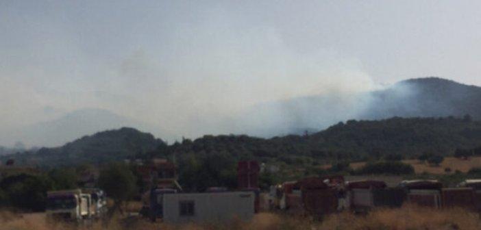 Συναγερμός για φωτιά στο Θύρρειο (VIDEO)