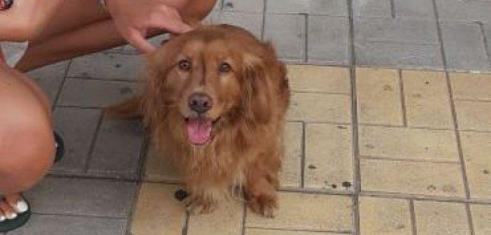 Αγρίνιο: Μήπως αναζητεί κάποιος αυτόν το σκύλο;