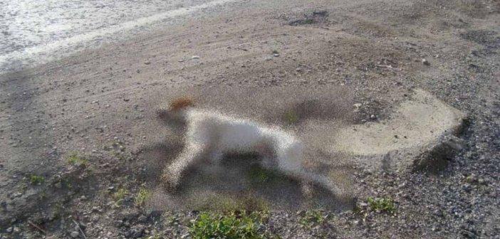 Δυτική Ελλάδα: Πρόγραμμα διαχείρισης κάθε είδους νεκρών ζώων: «Ανάσα» για Δήμους και κτηνοτρόφους