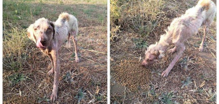 Μεσολόγγι: Βρήκαν σεττεράκι σε άθλια κατάσταση, κοκαλιασμένο, να τριγυρνάει μόνο του (ΦΩΤΟ)