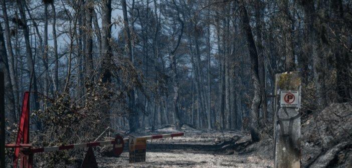 Φωτιές: 450% αυξήθηκε η καμένη έκταση – Αρνητική πρωτιά για την Ελλάδα