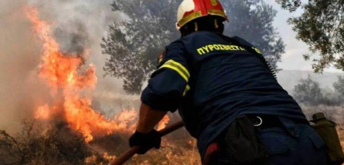 Φωτιά στη Φωκίδα: Εκκενώνονται Ελαία και Καλλιθέα – Μήνυμα του 112 (VIDEO)