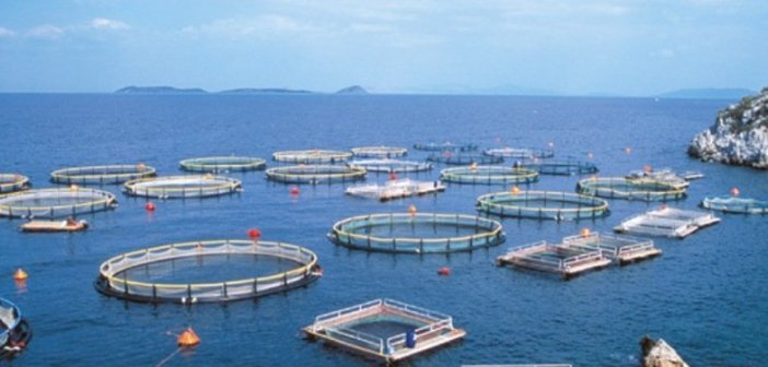 Τμήμα Αλιείας Μεσολογγίου -Τα παράδοξα των βάσεων: 13 θα γίνουν αλιείς και 150 θα τους … φυλάνε! –