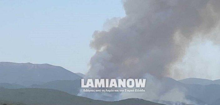 Φωτιά στο Λογγίτσι Φθιώτιδας – Εντολή εκκένωσης του οικισμού έδωσε ο αντιπεριφερειάρχης