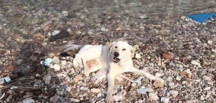Ναύπακτος: Απίστευτο…Βρέθηκε σκυλάκι με σπασμένα πόδια στο ΣΚΑ