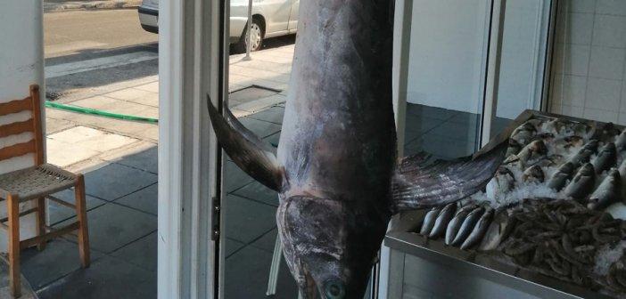 Ο Ξιφίας που έγινε ατραξιόν σε ψαράδικο του Αγρινίου! (ΔΕΙΤΕ ΦΩΤΟ)