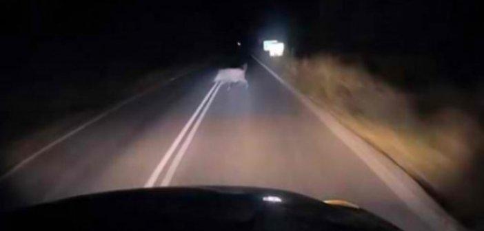 Αμφιλοχία: Αγριογούρουνο προκάλεσε τροχαίο – «ευτυχώς που δεν έτρεχα» λέει ο οδηγός