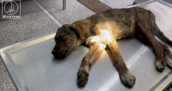 Αμφιλοχία: Διερχόμενος οδηγός φροντίζει αδέσποτο σκύλο μετά από τροχαίο (VIDEO)