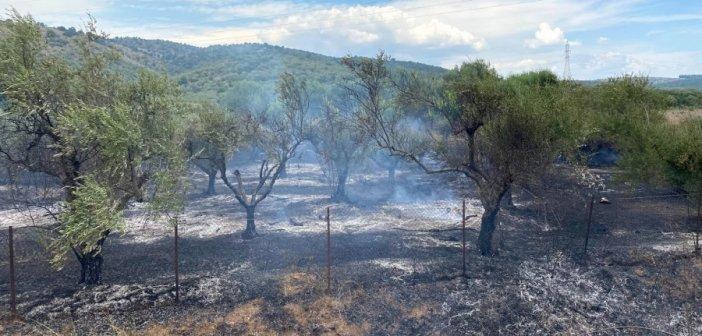 Κυψέλη Αγρινίου: Φωτιά σε λιοστάσι – Τέθηκε υπό έλεγχο από την Πυροσβεστική