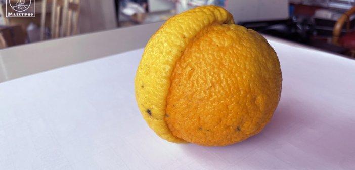 Αμφιλοχία: Μισό λεμόνι και μισό πορτοκάλι – Τα περίεργα της φύσης (ΦΩΤΟ)