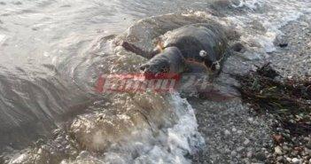 Δυτική Ελλάδα: Εντοπίστηκε νεκρή καρέτα καρέτα σε παραλία