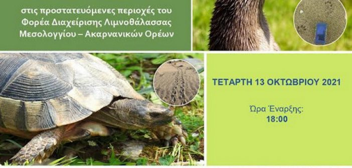 Αιτωλικό: Ημερίδα παρακολούθησης θαλάσσιας χελώνας, βίδρας και κρασπεδωτής χελώνας