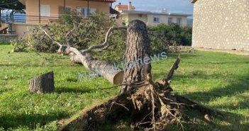 Η δύναμη των ανέμων ξερίζωσε δέντρα στο Αντίρριο (VIDEO)