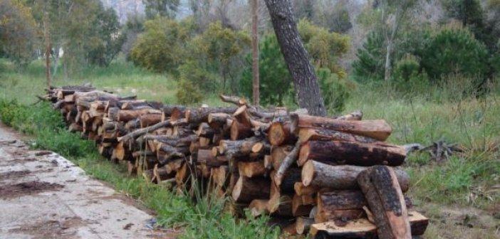 «Οργιάζει» η λαθροϋλοτομία στην Αιτωλοακαρνανία – Η ενεργειακή κρίση θα εκτινάξει το φαινόμενο