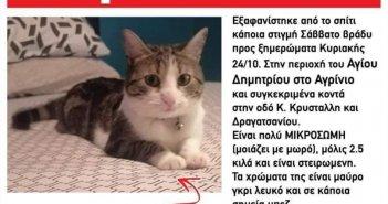 Χάθηκε γάτα στην περιοχή Αγίου Δημητρίου