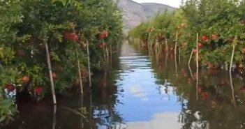 Βούλιαξαν οι ροδιές στην Κατοχή – Μεγάλες οι ζημιές – Μέρα με τη μέρα αποκαλύπτονται οι επιπτώσεις του «Μπάλου» και στο δήμο Μεσολογγίου (VIDEO)
